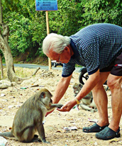 Old men feeding monkeys